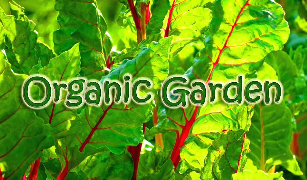 City Of 10,000 Buddhas   Organic Garden